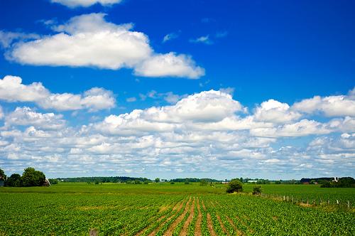 不動産投資に農地を利用するには?|宅地転用できる区分や条件を確かめよう!